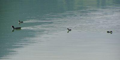 Der Weißensee im Allgäu in Füssen