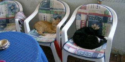 Tier Haustierpraxis Langenhagen in Langenhagen