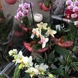 Blumen und Geschenke Regine Karl in Borsdorf