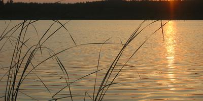 Anglerverein Lubowsee e.V. in Zühlsdorf Gemeinde Mühlenbecker Land