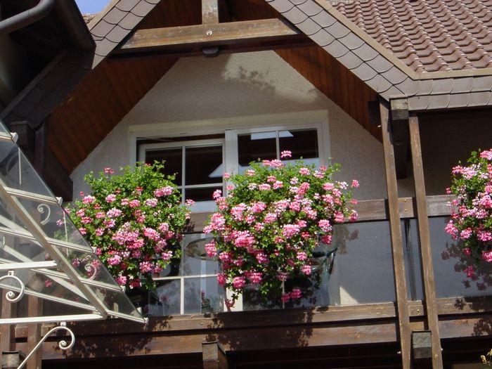 Bilder Und Fotos Zu Ferienwohnung Rhodt Malerwinkel In Rhodt Unter
