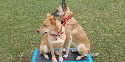 Hundeerziehungstraining Martina Reygers in Bocholt