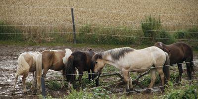 Naturalkids® Ranch in Ronnenberg