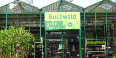 Buchwald grün erleben Pflanzencenter Gartenmarkt in Krummsee Gemeinde Malente