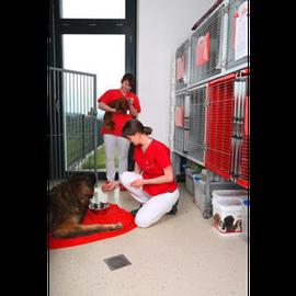Bild zu Tierärztliche Klinik Lautertal in Lautertal in Oberfranken